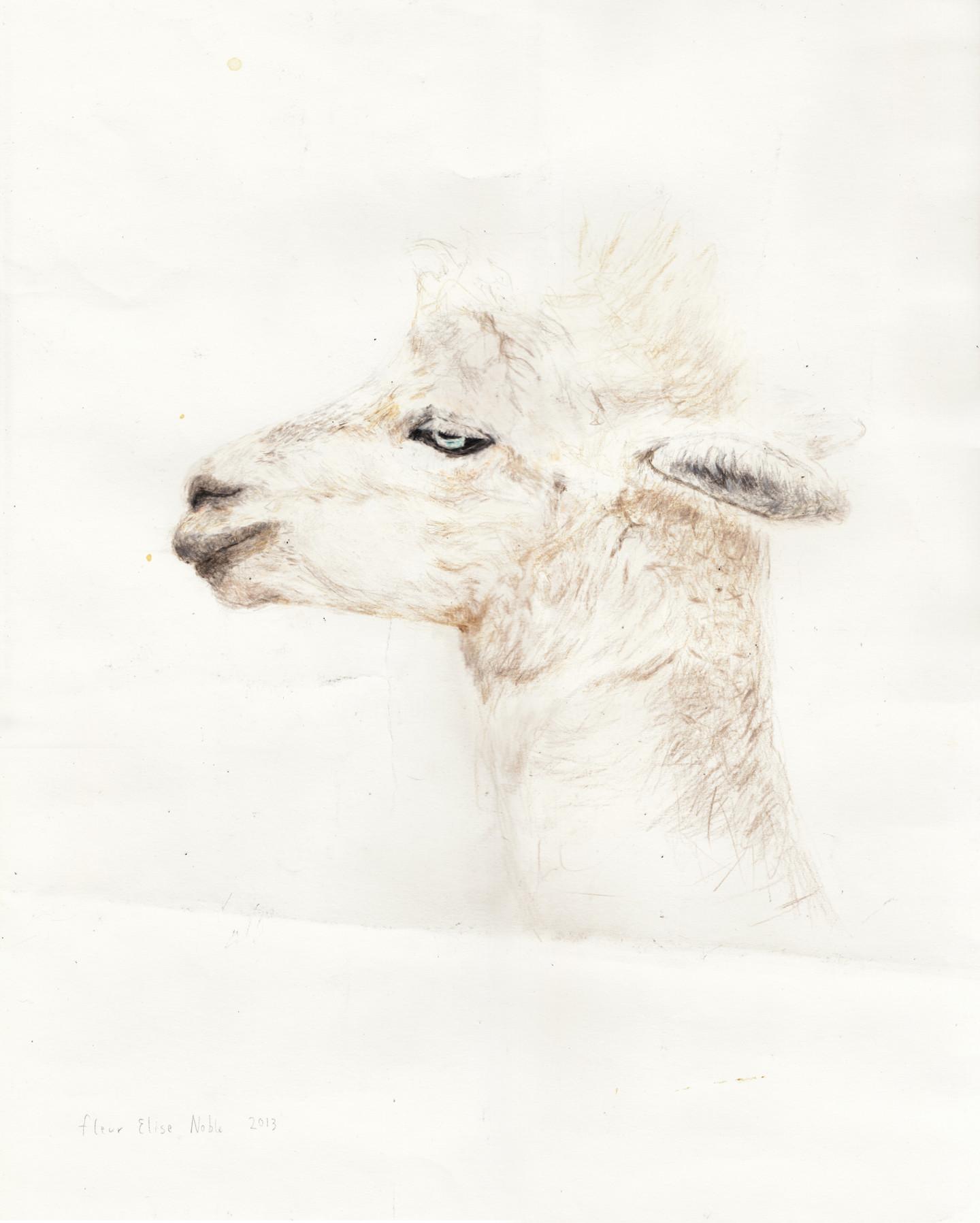 Fleur Elise Noble - Alpaca Profile