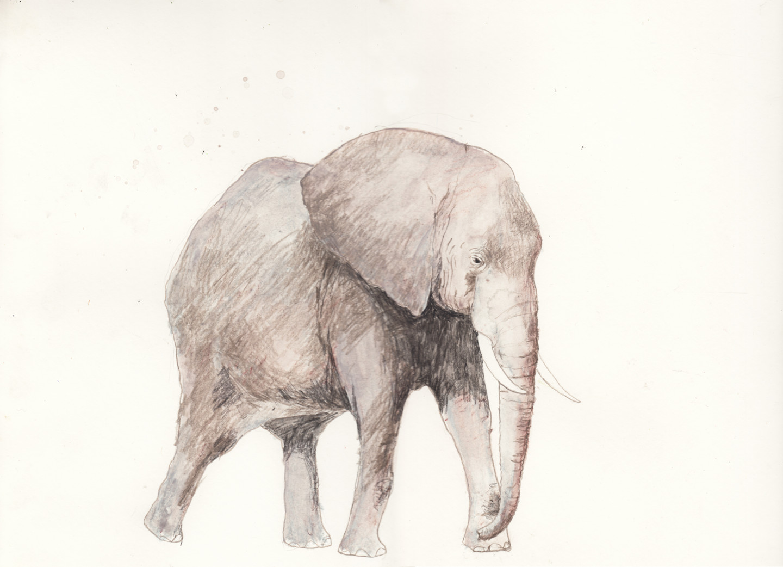 Fleur Elise Noble - elephant-40x30.jpg
