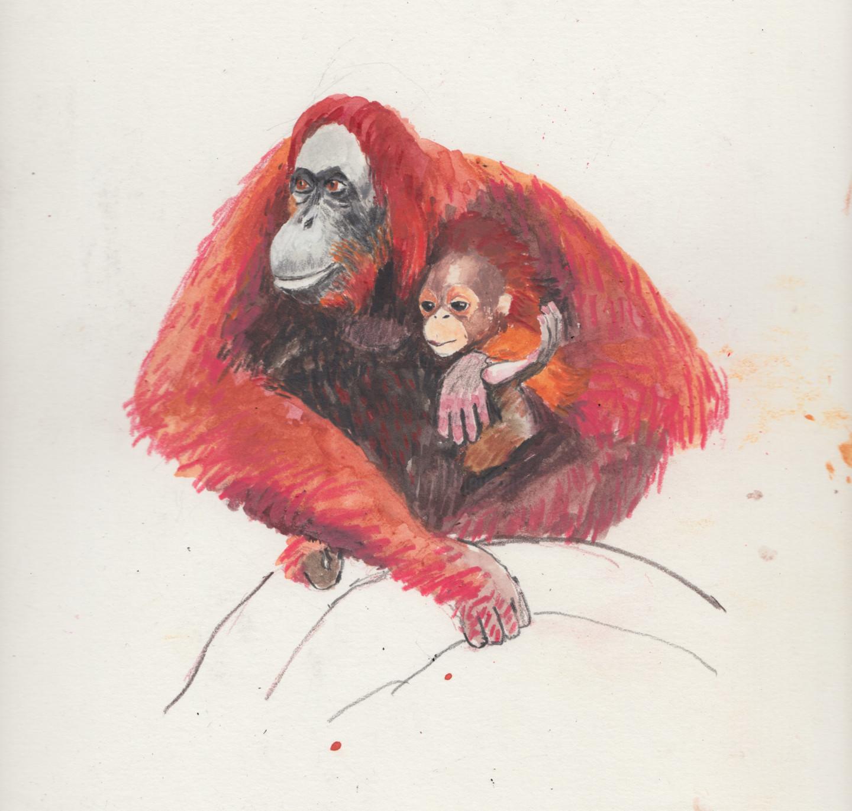 Fleur Elise Noble - Orangutans