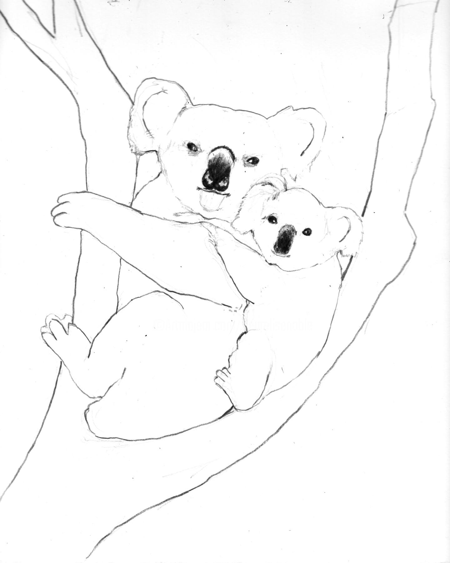 Fleur Elise Noble - Koalas