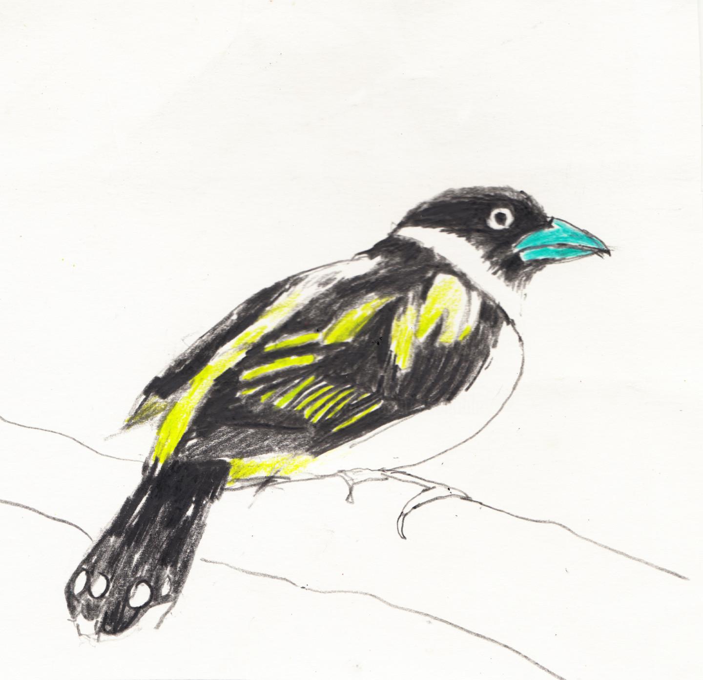 Fleur Elise Noble - Bird 3