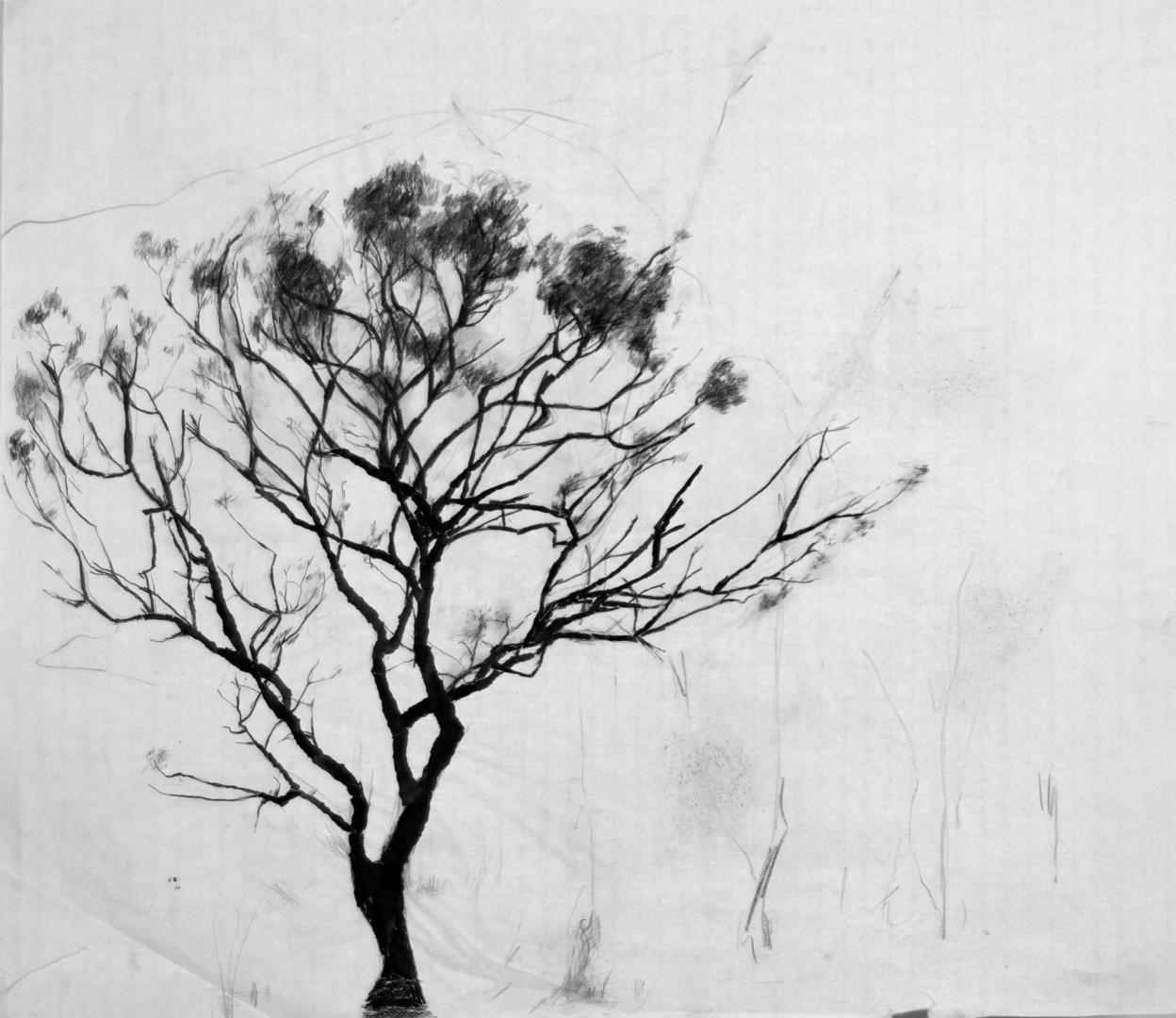 Fleur Elise Noble - Tree Drawing 2